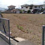Yamaichi ruins