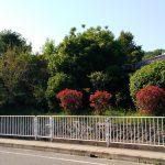 The estimated place as 'Kishimura-angu'